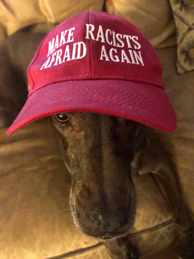 Ginger the dog with Make Racists Afraid Again baseball cap